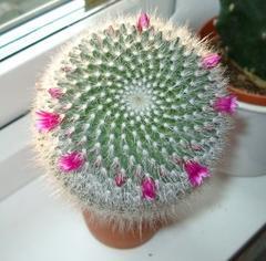 http://www.salonzvetov.ru/images/kaktus2.jpg