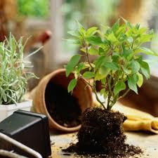 Для цветоводов и какие то растения